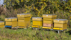 Yellow bee hives Stock Photos