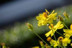 Yellow Bee stock photo