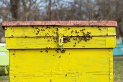 Yellow beehive, apiculture stock photos