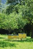 Yellow beehives Stock Images