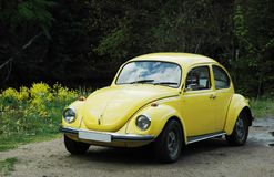 Yellow beetle Stock Photo