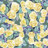 Yellow begonia  flower, watercolor, pattern seamless Royalty Free Stock Image