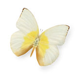 Yellow and beige butterfly isolated on white Stock Image