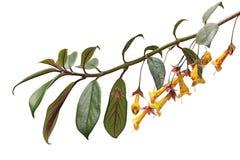 Yellow Bell Flower Stock Photo