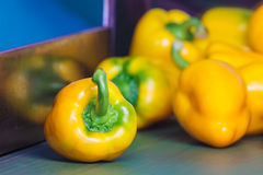 Yellow bell peppers on a conveyor belt Stock Photography