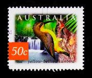 Yellow-bellied Sunbird Nectarinia jugularis, Nature of Australia - Rainforests serie, circa 2003 Royalty Free Stock Images