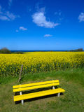 Yellow bench in front of canola field and the sea Royalty Free Stock Photos