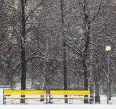 Yellow benches in winter park Stock Images