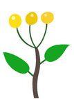Yellow berry illustration Stock Photos