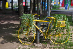 Yellow bicycle with ivy. Yellow bicycle with green ivy standing in park Royalty Free Stock Photo