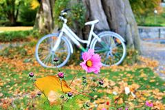 Yellow, Bicycle, Plant, Flower
