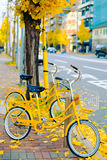 Yellow bicyle with ginkgo trees at autumn in Kyoto, Japan Stock Photography