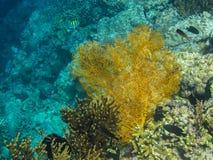 yellow big coral stock photo