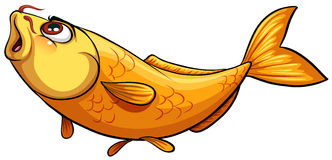 Yellow big fish Royalty Free Stock Photos