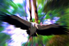 Yellow billed Stork bird flying in the forest Royalty Free Stock Photography