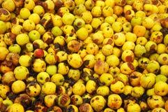 Yellow bio apples Stock Photography