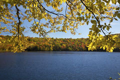 Yellow birch and autumn leaves along shore of Russell Pond. Royalty Free Stock Photography