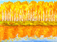 Yellow birch forest in autumn, painting Royalty Free Stock Image