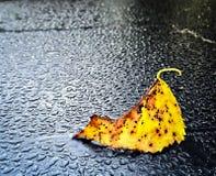 Yellow birch leaf. Fading leaf from birch tree Royalty Free Stock Photo