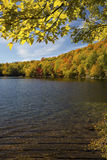 Yellow birch leaves frame Russell Pond in autumn, New Hampshire. Royalty Free Stock Photo