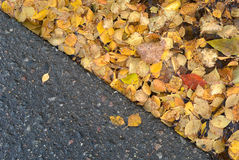 Yellow birch leaves in puddle near road Royalty Free Stock Image