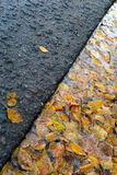 Yellow birch leaves in puddle near road Royalty Free Stock Images