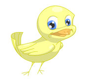 Yellow bird. Funny bird yellow smiling. Cliping path included Stock Images