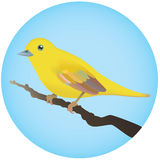 Yellow Bird. A small yellow bird perched on a tree branch Stock Images