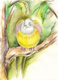 Yellow bird Stock Photography
