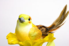 Yellow Bird 6015. Yellow bird resting on a yellow flower Stock Images