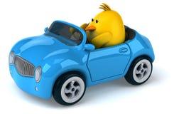 Yellow bird in a car Stock Photos