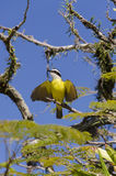 Yellow bird flapping its wings Stock Photo
