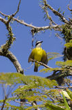 Yellow bird flapping its wings Stock Photos