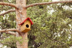 Yellow bird house on tree.  royalty free stock images