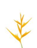 Yellow bird of paradise flower Royalty Free Stock Photography