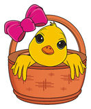 Yellow bird peek up from basket. Snout of chick peek up from wooden basket with pink bow Stock Photography