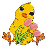 Yellow bird and pink tulips Stock Image