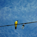 Yellow bird under a blue sky Royalty Free Stock Photo