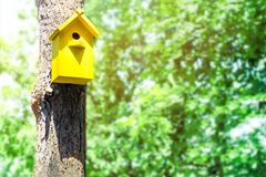 The yellow birdhouse on a tree in spring forest. Concept of approach of spring, summer, birds arrival, spring mood.  Stock Images
