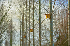 Yellow birdhouses in a row Stock Images