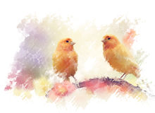 Yellow Birds Watercolor Royalty Free Stock Images