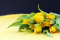 Yellow & black Stock Photography