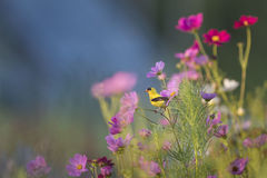 Yellow and Black Bird on Purple Petaled Flower Stock Photo