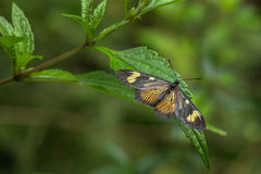 Yellow and black butterfly and green background defocused Stock Photography