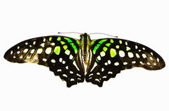 Yellow and black butterfly Isolated on White. Soft shadow Royalty Free Stock Images
