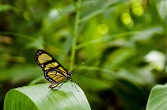 Yellow and Black Butterfly on Top of Green Leaf Stock Images