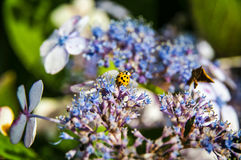 Yellow and black dot - ladybug Royalty Free Stock Images