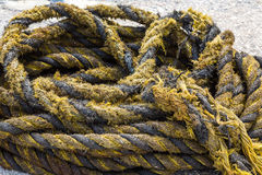Yellow and Black Frayed Rope Royalty Free Stock Image