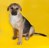 Yellow with black markings puppy sitting on yellow Royalty Free Stock Photography