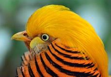 Yellow Black and Orange Bird Head Stock Images